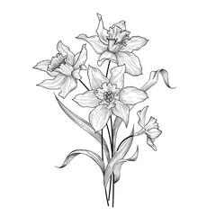 Floral bouquet. Flower daffodil engraving greetign card background.