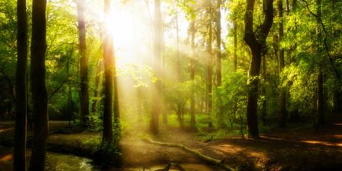 Idyllischer Sonnenaufgang im Wald mit Sonnenstrahlen im Nebel