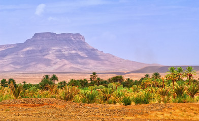 Table mountain and date palms landscape in oasis in Draa Valley, Morocco