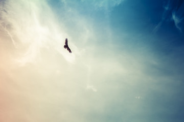 Soaring hawk with wispy clouds