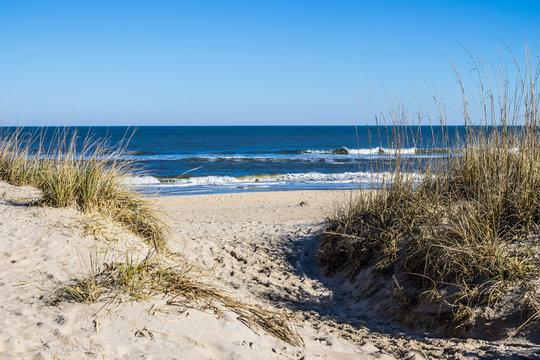 Sandbridge Beach in Virginia Beach, Virginia with beach grass on dunes and ocean background.