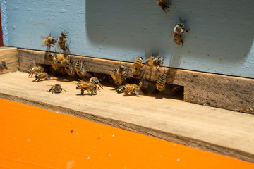 Beekeeping Photographs