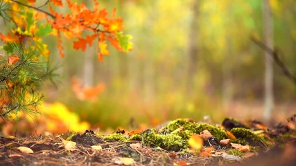 Fototapete - Autumn sunny forest background. Beautiful fall scene. Blurred abstract nature background. Full HD 1080p