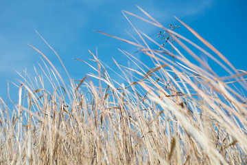 beautiful abstract grass texture on blue sky.