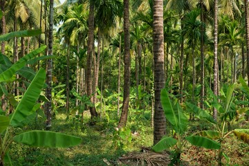 green jungle of India with palm tree trunks
