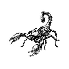Hand drawn sketch of scorpion. Tattoo design.
