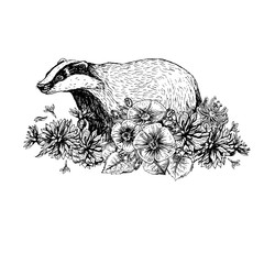 Hand drawn badger with flowers. Vintage style. Print for t-shirt. Tattoo design.