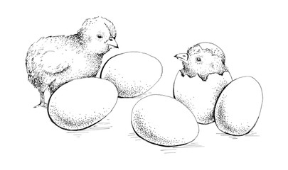 egg and chicken
