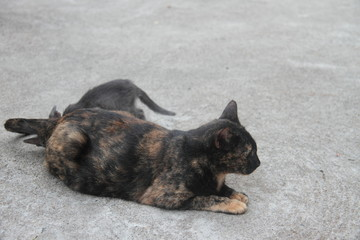 Cat near a temple