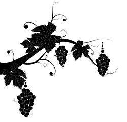 Grape silhouette on white background