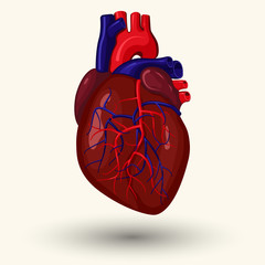 human heart cartoon