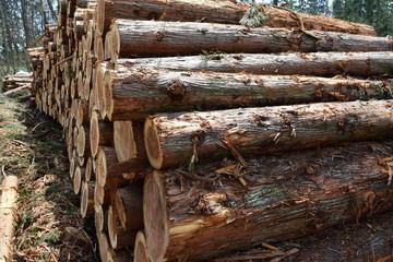 杉の丸太 / 伐採業者が杉の木を伐採した直後に撮影した丸太の写真です。森の中に積まれた丸太の大きさは、直径約20cm~50cm位です。