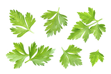 Parsley leaf isolated on white. Closeup