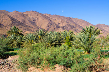 Green oasis in Morocco