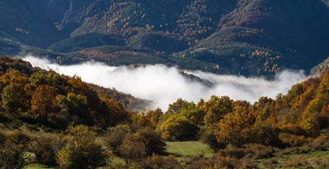 Bosques en otoño y niebla. Montañas de Riaño, León, España.
