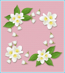 branch of jasmine flowers isolated on pink background