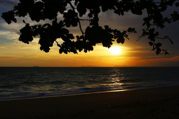 Beautiful sunset at the beach with silhouette of branches