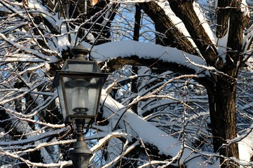 lamp in florence with snow, Italy Fotomurales