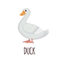Cute Duck in flat style.