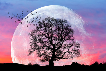 """Moon at it largest also called super moon """"Elements of this image furnished by NASA"""""""