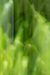 Blurred abstract background. Rainforest concept.