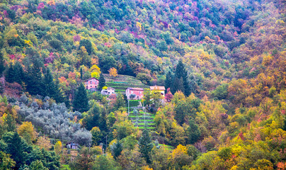 Country houses with trees with autumn colors