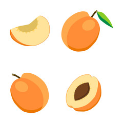 vector illustration on the theme of fruit apricot, label market
