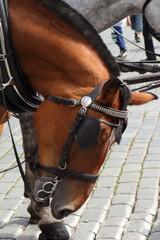 Tête de cheval attelé