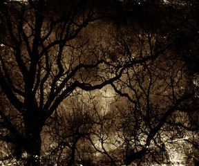 Twilight in the forest, scary trees, mystic dark grunge halloween background
