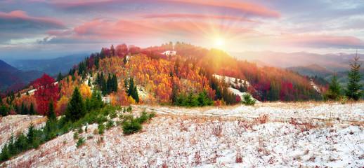 Wall Mural - Golden Forest Ridge Sokilsky