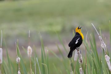 Glorious morning sung by blackbird