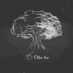 old olive tree hand drawn on a chalkboard, vector illustration