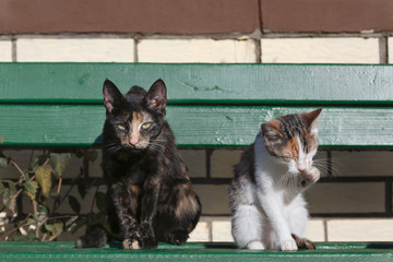 Two cats sitting on green wooden bench in front of a brick wall