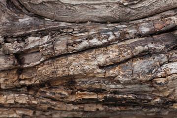 Bark texture. Wooden background
