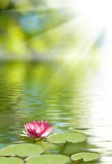 Fond de hotte en verre imprimé Nénuphars image of lotus flower on the water