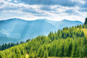 Green sunny hills
