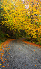Road to Autumn, Geres, Portugal