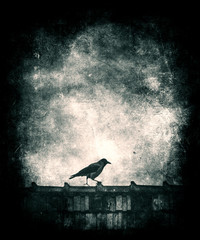 Beautiful grunge vintage wallpaper, Bird on roof, bird silhouette