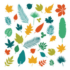 Silhouettes of leaves. Collection of leaves in cartoon flat styl