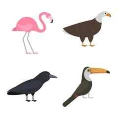 Birds vector set illustration isolated