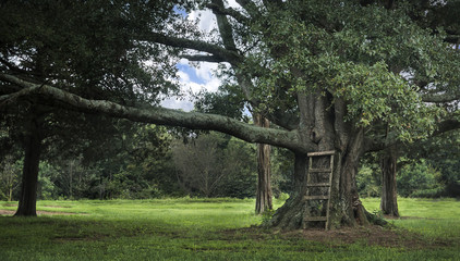 Large tree with ladder serene scene