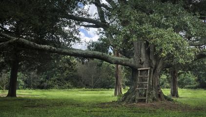 Large tree with ladder serene scene