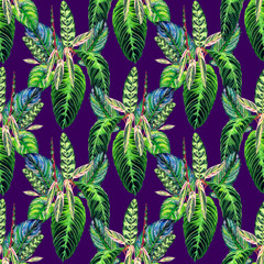 Seamless tropical floral pattern. Hand painted watercolor exotic calathea leafs on violet background. Textile design.