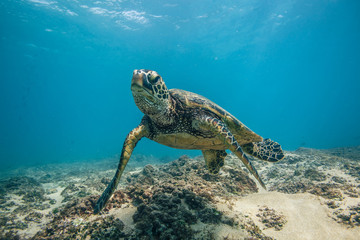 Ocean Life in Maldives Waters With Turtle Corals and Fish