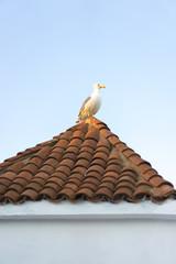 Seagulls in Morocco