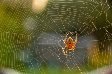 Spider building a sticky web outdoors