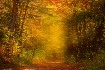 Autumn trail in misty morning