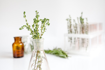 fresh thyme in bottle on white background