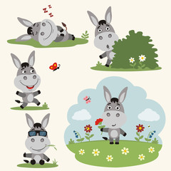 Vector set funny donkey in different poses on summer meadow with flowers. Collection donkey in cartoon style.