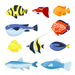 Vector fish set. Underwater and aquarium fishes